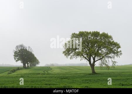 Fog in the morning, community of Damp, landscape Schwansen, Schleswig-Holstein, North Germany, Europe - Stock Photo
