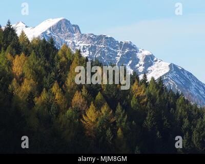 Mountain tip rising behind trees, Karwendel, Pertisau, Lake Achen, Austria - Stock Photo