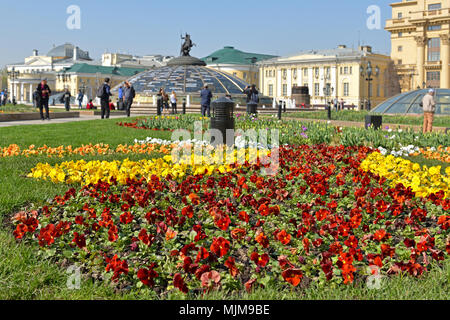 Flowers Pansies on Manege square - Stock Photo