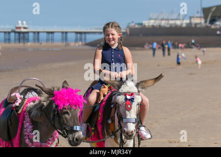 Blackpool Lancashire. UK Weather. 06/05/2018.  Sunny start to the day on the Fylde Coast as Lydia aged nine takes a donkey ride on the sands. The north-west coast is experiences the hottest temperatures so far this week. Credit: MediaWorldImages/AlamyLiveNews - Stock Photo