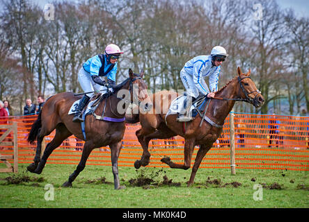 Two amateur jockeys riding bay and chestnut hunters, galloping over soft ground whilst competing in a point-to-point event - Stock Photo