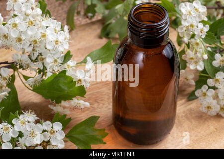 A bottle of tincture with fresh blooming hawthorn branches - Stock Photo