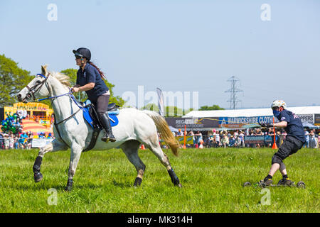 Horse Boarding Stock Photo 43251901 Alamy