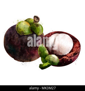 Mangosteen on white background. Watercolor illustration - Stock Photo