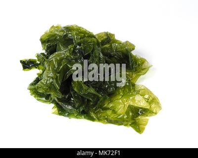 Sea lettuce – Lechuga de Mar  Edible green algae in the family Ulvacceae. Binomial name: Ulva lactuta. - Stock Photo