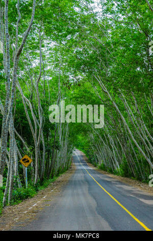 Beautiful country road in rural of Thailand - Stock Photo
