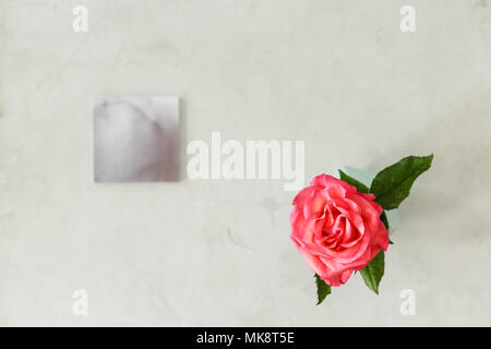Top view of a pink rose on bright background with copy space. Birthday flower concept - Stock Photo