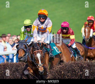 A horse and jockey crash through a fence after mistiming a jump during a point-to-point race - Stock Photo
