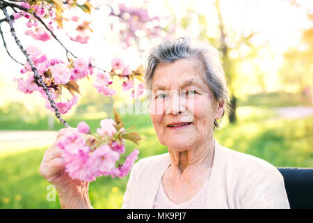 Elderly woman in wheelchair in spring nature. - Stock Photo