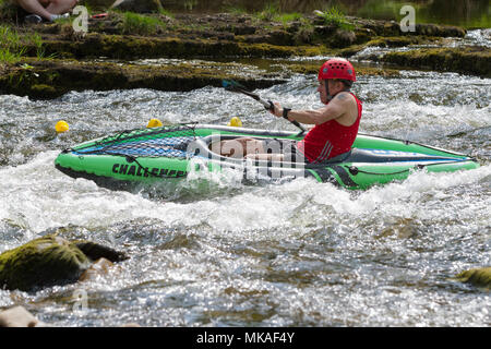 Richmond, North Yorkshire, UK. Monday 7th May, 2018. Organised by Richmond Duck Club, the Grand Duck Race takes place annually on May Day bank holiday and sees 2500 plastic ducks tipped into the River Swale from the Green Bridge from where they float downstream, over the waterfalls to the finishing line at the Batts near the Station Bridge. Credit: Andrew Nicholson/Alamy Live News - Stock Photo