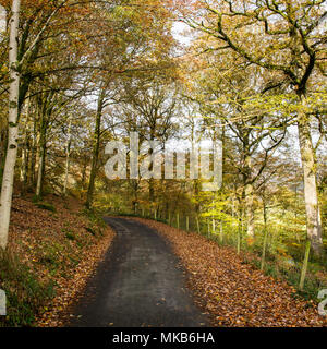 Trees displaying autumn colours line a quiet country lane, part of National Cycle Network route 6, near Ambleside in England's Lake District National  - Stock Photo