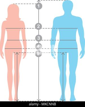 Silhuettes of man and women in full length with measurement lines of body parameters . Man and women sizes measurements. Stock vector cartoon illustra - Stock Photo