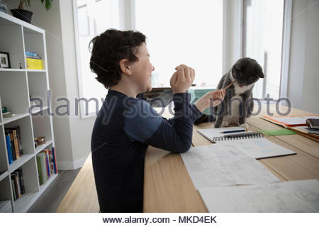 Boy with pencil drawing, playing with cat on dining table - Stock Photo
