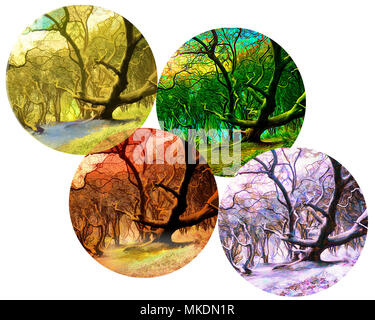 FOUR SEASONS CONCEPT: Magic of the Forest - Stock Photo