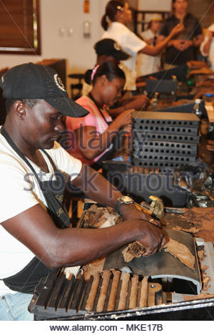 Workers roll and press cigars at the LaFlor Dominicana Cigar Factory in the Dominican Republic. - Stock Photo