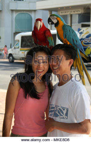 Two Japanese tourists posing with parrots (Macaws) on their heads outside the International Marketplace in Hawaii. - Stock Photo