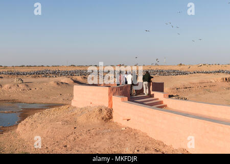 Tourits looking at the birds, Demoiselle Crane (Anthropoides virgo) who winter here. Kichan, a village in the Marwari Jain community, whose inhabitants feed every winter since 1970, the wintering Cranes, Thar Desert, Rajasthan, India - Stock Photo