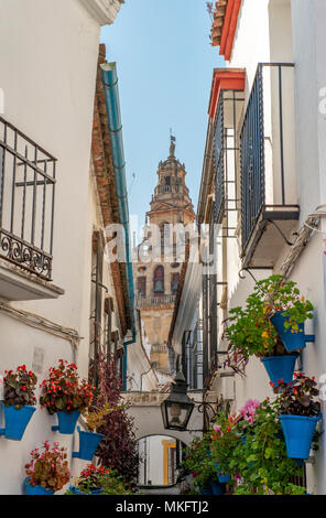 Calle de las Flores, alley decorated with flowers, in the back church tower of the Mezquita-Catedral de Córdoba or Cathedral of - Stock Photo