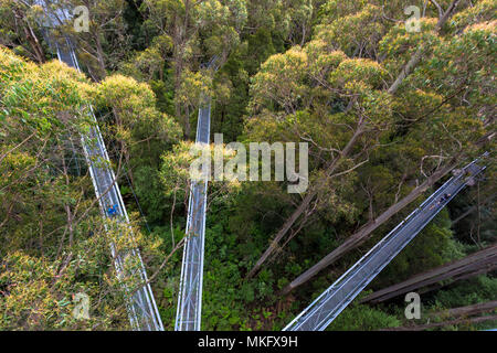 Otway Fly Treetop Adventures treetop walk Melbourne Australia Great Ocean Road - Stock Photo