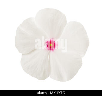 White periwinkle flower head isolated on white - Stock Photo