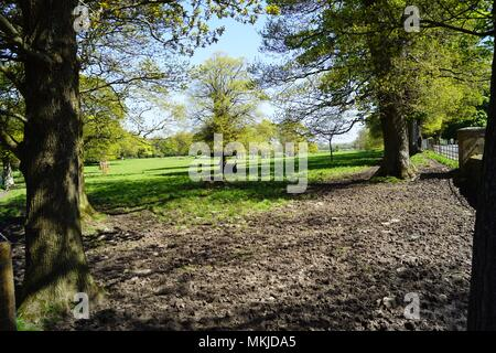 Spring leaves, trees Lezayre Isle of Man - Stock Photo