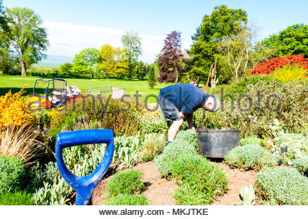 A gardener at Ness Gardens tending to the plants and gardens at the  Landscapes gardens at The University of Liverpool's Ness Botanical  Gardens, Ness Gardens, Ness, Wirral, Merseyside England UK Credit: Christopher Canty Photography/Alamy Live News - Stock Photo