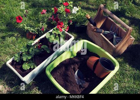 Spring planting flowers Gardening tools