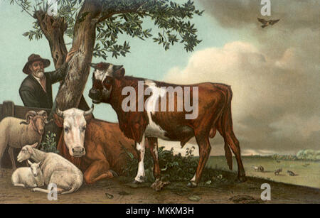 Sheep, Cows Under Tree - Stock Photo
