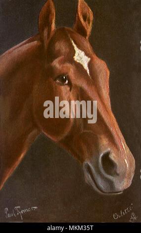 Jucker, Hungarian Horse - Stock Photo