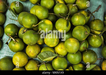 Pile of green unripe oranges background. Many tropical citrus fruit for sale at a food market - Stock Photo