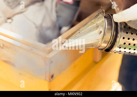 Beekeeper is working with bees and beehives on the apiary.Bee smoker is used - beekeepers tool to keep bees away from hive