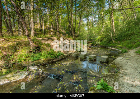 A woodland footpath in early spring with a flight of steps down a bank leading to stepping stones across a stream, in dappled shade