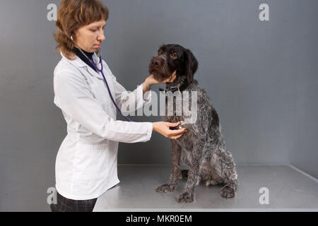 vet examining dog with stethoscope in veterinarian clinic - Stock Photo