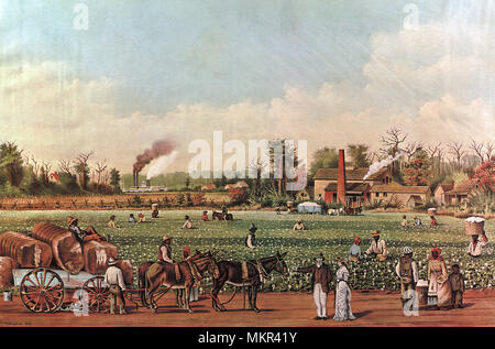 A Cotton Plantation on the Mississippi - Stock Photo