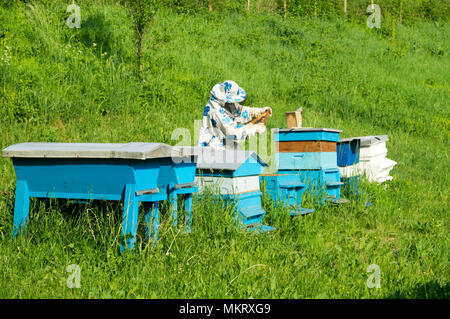 Bee keeper with blue beehives - Stock Photo