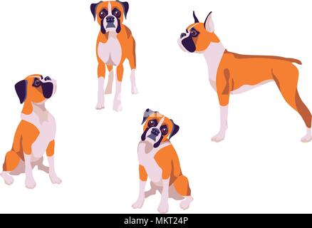 Vector illustration of dogs boxer breed in different poses on white background - Stock Photo