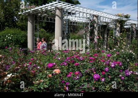 Visitors in rose garden at the Huntingtron Gardens in Pasadena, CA - Stock Photo