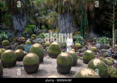Visitor at the cactus garden in the Huntington Gardens at Pasadena, CA - Stock Photo