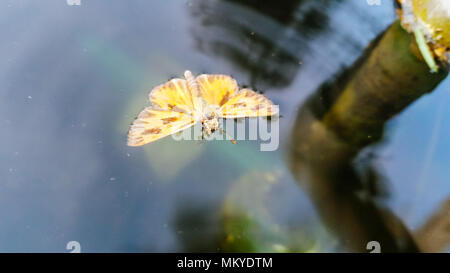 Butterfly on the water - Stock Photo
