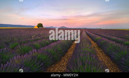 A view of a lavender field near the township of Lavandel. - Stock Photo