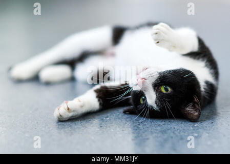 Black-and-white cat relaxing at home. - Stock Photo