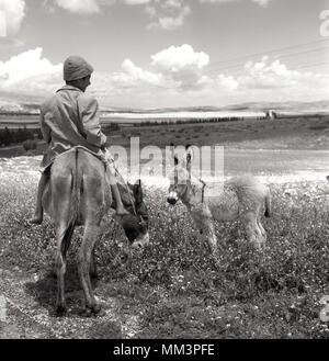 1955, historical, Outside overlooking a barren valley area, a young Bedouin shepherd boy in bare feet sitting on his donkey, with a small, young donkey accompanying them. The Arab Palestinians or Bedouins were a nomadic people who lived in the desert areas of what was then called Palestine, but which after WW2 in 1948 became territory in the newly formed state of Israel. - Stock Photo