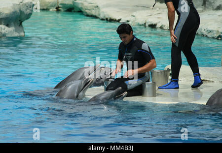 Riccione, Italy, 06 20 2015: dolphin trainers at work in the Oltremare aquarium in Riccione, Italy. - Stock Photo