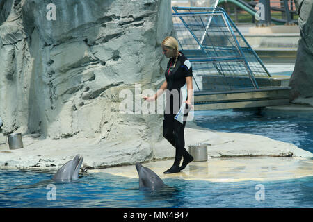 Riccione, Italy, 06 20 2015: dolphin trainers at work in the Oltremare aquarium in Riccione, Italy. - Stock Photo
