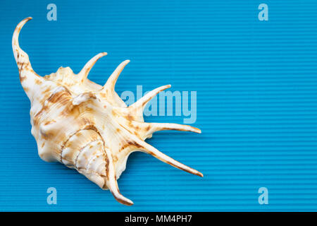 Beautiful travel concept, seashell closeup on blue cardboard background with empty space. - Stock Photo