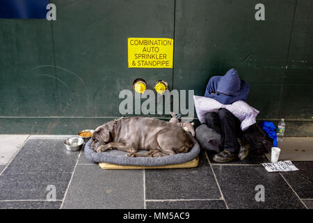 A homeless man and his dog rest during the day in Manhattan, New York City May 6, 2018. - Stock Photo