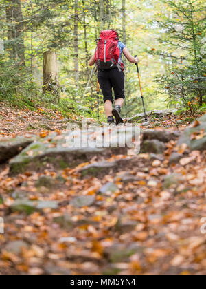 Woman on hiking tour in the Northern Black Forest, Bad Wildbad, Baden-Württemberg, Germany - Stock Photo