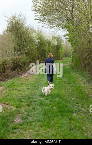 Lady walking with a west highland terrier (looking round) along a grassy lane, through an avenue of trees in spring time. Nottinghamshire England UK - Stock Photo