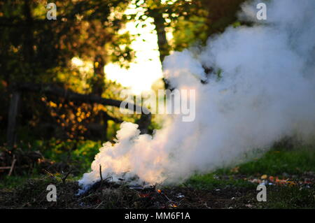 smoky campfire in a summer forest - Stock Photo