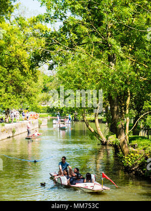 Punting, River Cherwell, Christchurch Meadow Walk, Christ Church, Oxford, England, UK, GB. - Stock Photo